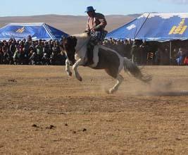 Mongolia herders