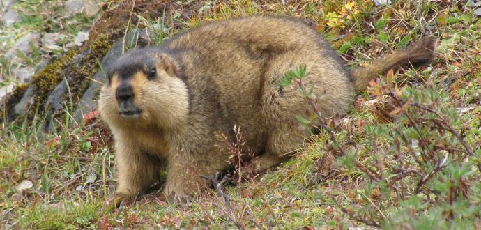 Mongolia wild animals